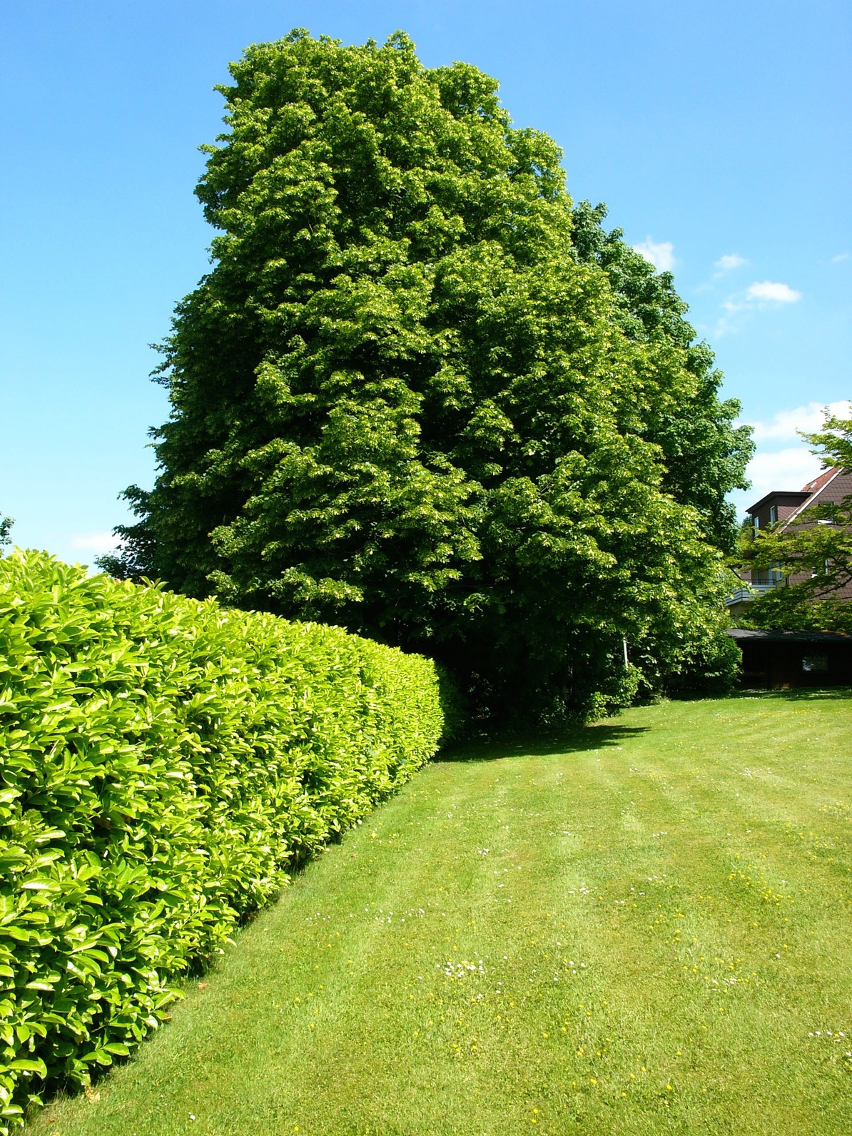Frisch gemähter Rasen einer Gartenanlage in Oerlinghausen bei Bielefeld im Teutoburger Wald